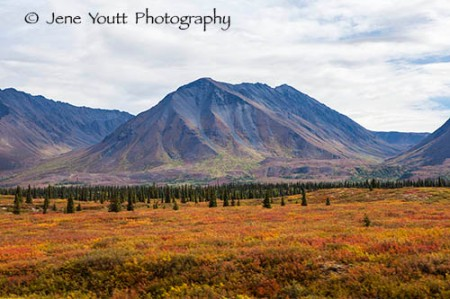 Denali National park, mountain landscape