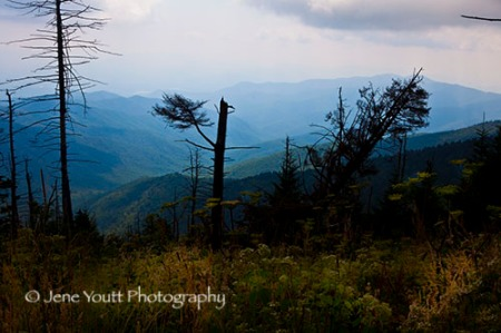 Clingmans dome MG_9872