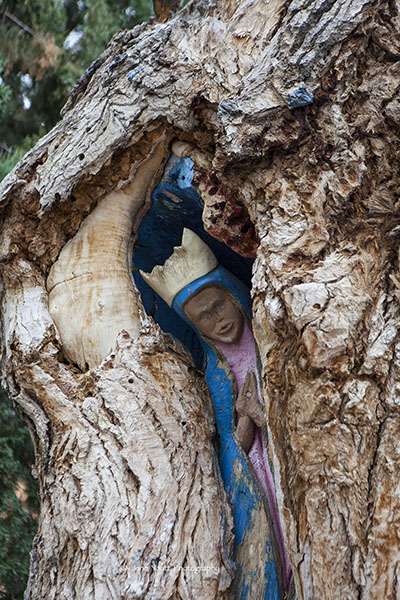madonna in tree