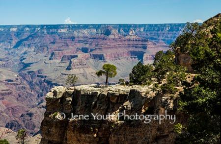 lone tree on a ridge, grand canyon, az