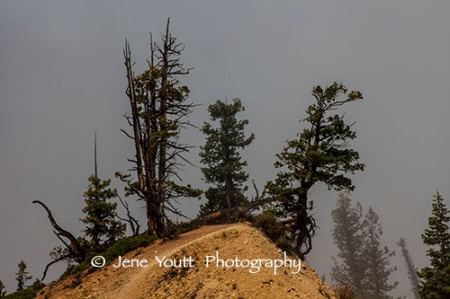 three pine trees, bryce nat'l park