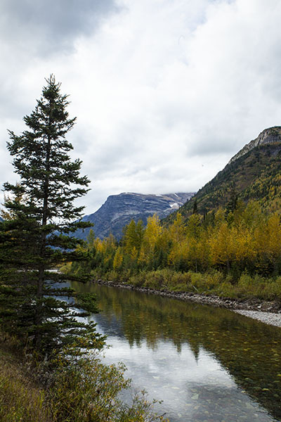 aspens in Glacier national park