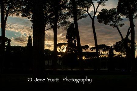 rome pine trees 9476 copy